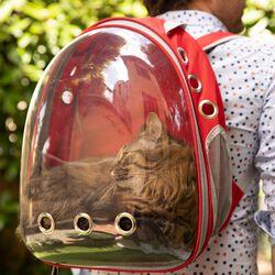 Trasportino zaino per cani e gatti, , large