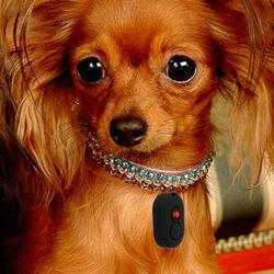 Loc8tor Pet: localizzatore per cani e gatti, , large