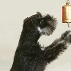 Campanello per cani, , large