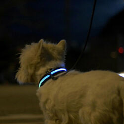 Collare con luce LED per cani - Safe Light, , large