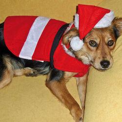 Costume di Babbo Natale per cani, , large